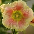 Flower Head by Cliff Norton