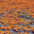 Flower Hill by Russ Harris