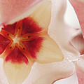 Flower Hoya 3 by Jill Reger