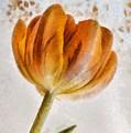Flower - Id 16235-142750-0708 by S Lurk