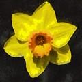 Flower - Id 16235-220300-0389 by S Lurk