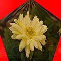 Flower In A Pentagon  by Jeff Swan