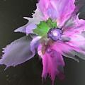 Flower In Black by Marilyn Johnson