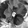Flower In Garden by Josiane Smith