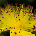 Flower In Macro by Svetlana Sewell