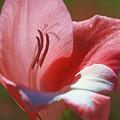 Flower In Pink Pastel by Deborah Benoit