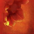 Flower In Red by Johan Lilja