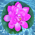 Flower In The Pool by Dennis Dugan