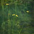 Flower In The Stream - Digital Art by A O Tucker