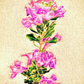 Flower-j by Larry White