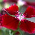 Flower by Jessica Wakefield