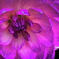 Flower by Joel Friedman