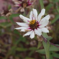 Flower by Julianne Minor