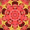 Flower Kaleidoscope by Chad Kroll