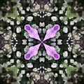 Flower Kaleidoscope_001 by Rene Wissink