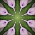 Flower Kaleidoscope_003 by Rene Wissink