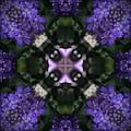 Flower Kaleidoscope_004 by Rene Wissink
