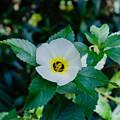 Flower by Karen Hart