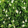 Flower Kissed Fields by Jenna Graham