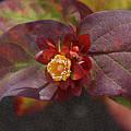 Flower Leaves by Carol  Eliassen