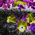 Flower Like Purple And Yellow by Petra Olsakova