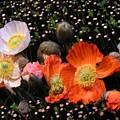 Flower Line Dance by Valia Bradshaw