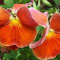 Flower Lips by Linda Sannuti