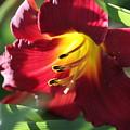 Flower by Lisa Spero