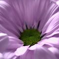 Flower Macro Beauty 3 by Johanna Hurmerinta