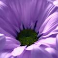 Flower Macro Beauty 4 by Johanna Hurmerinta