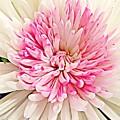Flower Macro. by Divine Kanza