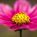 Flower Macro by Qing Jiang