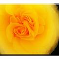 Flower by Mal Bray
