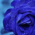 Flower by Mecar Rash