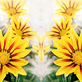 Flower Montage by Terence Davis