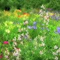 Flower Mosaic by Artie Rawls