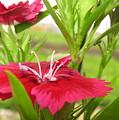 Flower by Navin Singhwane