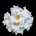 Flower by Nina Lin