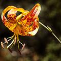 Flower Of Beauty by Kelley King
