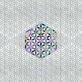 Flower Of Life Abalone Shell On Pearl by Creativemotions