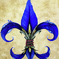 Flower Of New Orleans Blue Iris by Judy Merrell