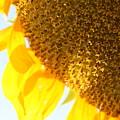 Flower Of The Sun by Karen Fowler