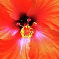 Flower On Fire by Annee Olden