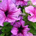 Flower Overload by Lisa Bates