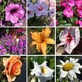 Flower Pattern by Howard Rose