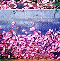 Flower Petals Saturated Ae by Lyle Crump
