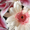 Flower Pink-white by Jill Reger
