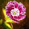 Flower Pop 2 by Paul Bartoszek