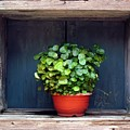 Flower Pot In A Window by Yali Shi