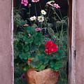 Flower Pot In Window by Bob Neiman